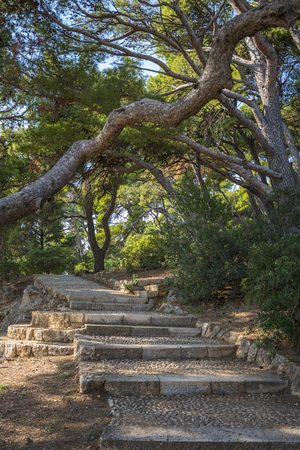Old staircase and surrounding vegetation in Dubrovnik. Croatia. 免版税图像