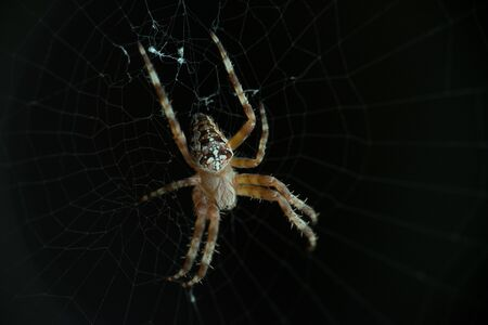 Macro, close-up of a spider web on a dark background