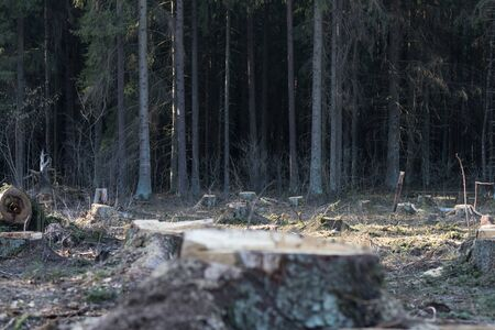 Deforestation in Europe and around the world, environmental problems destruction of nature.