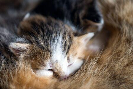 A feral cat feeds the kittens. Little two-week kittens suck milk.