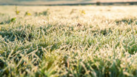Frozen grass background. The first frost in autumn.
