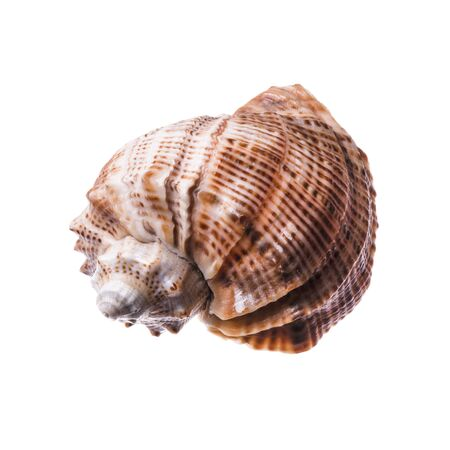 sea shell isolated on white.