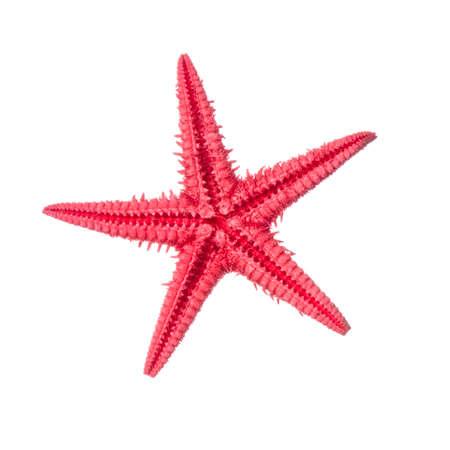 Red starfish isolated on a white background. Zdjęcie Seryjne