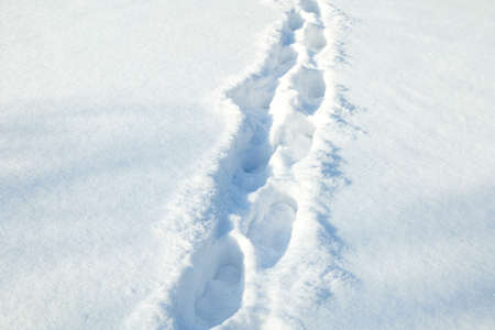 footprints in the snow. dearly through a winter field