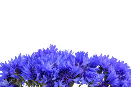 bouquet of flowers in hand. cornflowers close-up