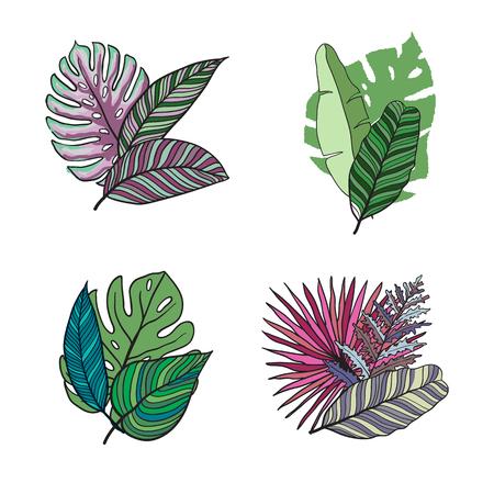 Hand drawn tropical leaves color vector set. Set Leaf. Exotics. Vintage vector botanical illustration. Illustration