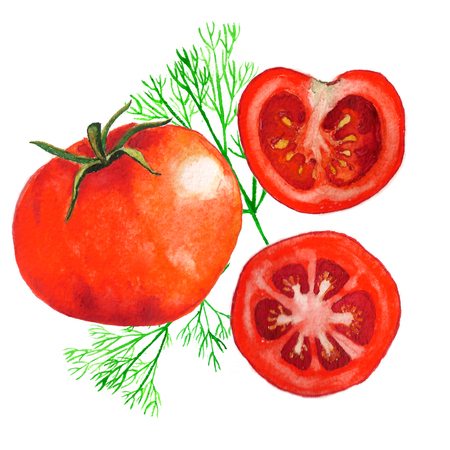A realistic watercolor painting of tomatoes with dill