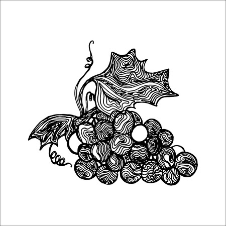 Black ink sketch of grape isolated on a white background. Vector illustration.