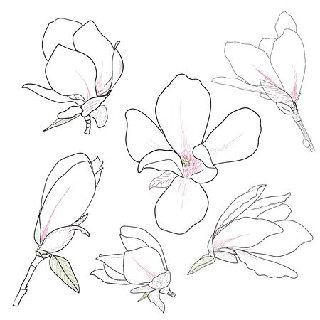 Set of hand drawn magnolia flowers. Floral sketching, line art. Isolated vector illustration