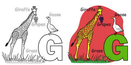 English alphabet coloring book for children. Letter G for Giraffe, Goose, Grapes. Vector illustration. 矢量图像
