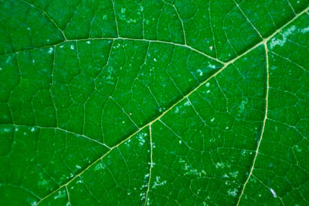 Green leaf close up, natural floral texture