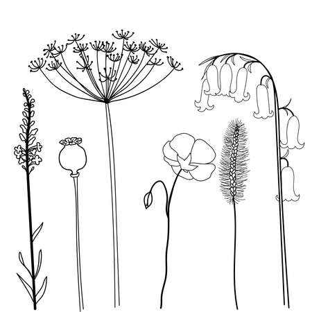 Field herbs poppy, bellflower, dill, flax and stems. Set of hand drawn vector illustration isolated on white background.
