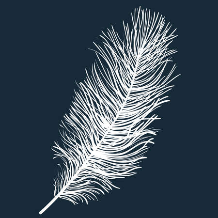 White fluffy light feather isolated on a dark background. Realistic hand drawn vector illustration