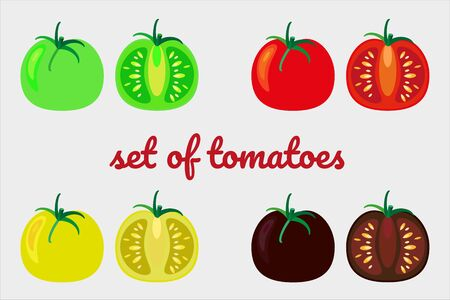 Set of different varieties of tomatoes. Different fresh vegetables on white background. Whole tomato and sliced. Vector drawing of isolated objects for your design.