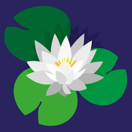 Flower and leaves of lotus, water lily, white water lily. Bright green leaves, white flower, blue background. Vector illustration for design botanical collection.