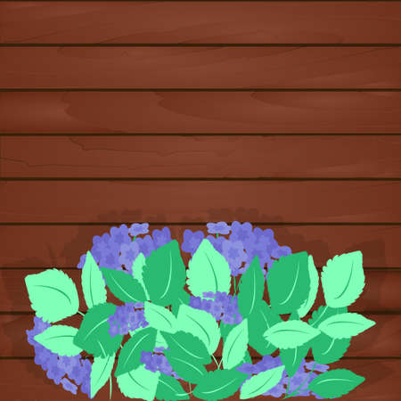 Large flowering hydrangea bush with green leaves and blue inflorescences on background of wooden wall of house, fence. Vector illustration for design of garden, greenhouse, cottage, home. 일러스트