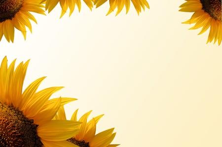 sunflower frame, yellow gradient background, scrapbook useful