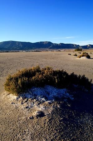 Dry salt lake, climate change: global warming - Rural landscape, bush with salt detail - Laguna de Salinas (Spain) photo