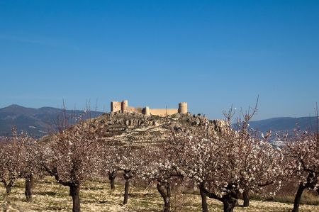 Easter in Spain - Spanish castle with almonds flowers - Location: Castalla (Alicante - Spain) photo