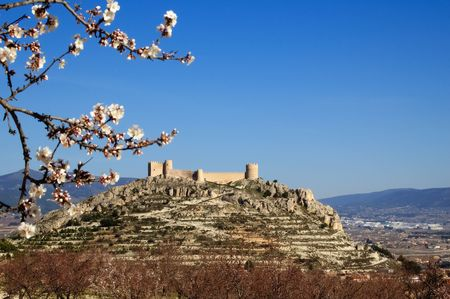 Easter in Spain - Spanish castle with almonds flowers. Location: Castalla (Alicante - Spain) photo