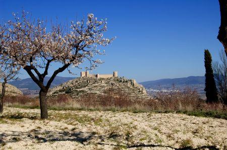 Easter in Spain - Spanish castle with almonds flowers. Location: Castalla (Alicante) Spain photo