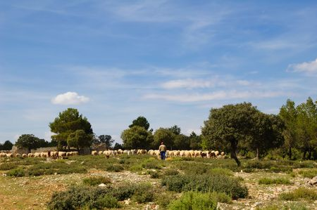 Flock of sheep with shepherd, spanish farming in Castilla - La Mancha Stock Photo - 4639041
