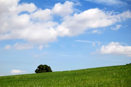 Background with green field, blue sky and tree photo