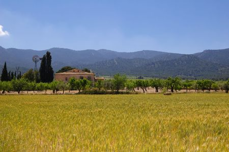 Wheat field and farmhouse on the background Stock Photo - 4885877
