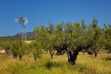 Old olive tree and farm wind mill, spanish farm field