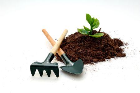 Cultivo de una planta, una nueva idea de concepto. Una pala y un rastrillo con una pequeña planta en el fondo blanco Foto de archivo