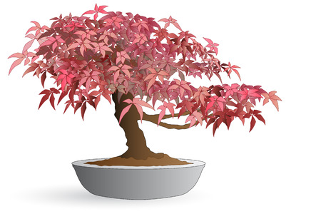 Isolated bonsai of japanese maple - Autumn colors Vectores
