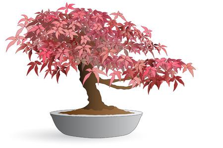 Isolated bonsai of japanese maple - Autumn colors Stock Illustratie