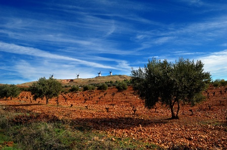 olive farm: Spanish field with vineyard, olive trees and historical windmills
