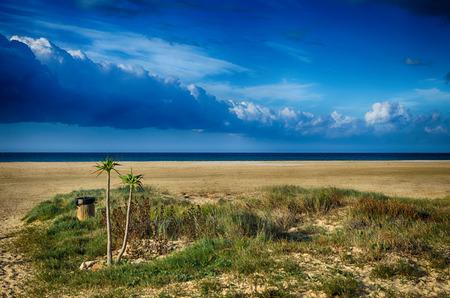 tarifa: Sandy beach and palms, blue sky. Location: Spain, Tarifa