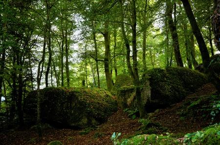 Große abgerundete Felsbrocken im berühmten Wald von Huelgoat in der Bretagne, Frankreich