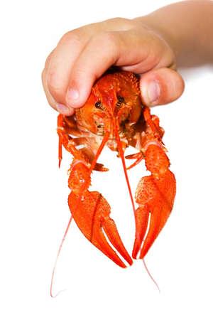 a little boy holding a crayfish photo