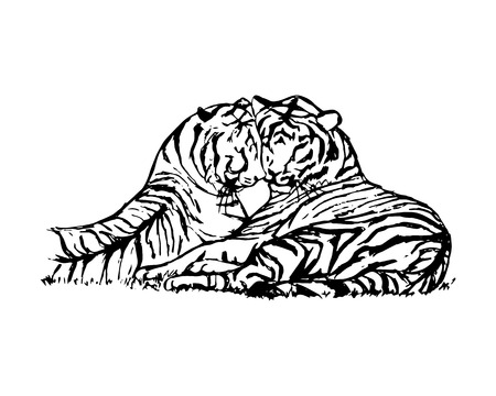 Graphic picture of wild cats. Two tigers lie next to. Abstract tigers pattern on white background, vector