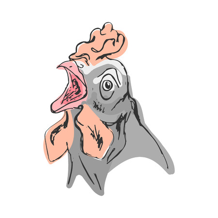The head of the cock, drawing in color. Abstract illustration, vector on white background