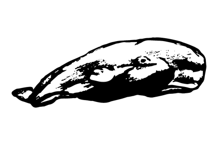 monstrous: Whale on white background, vector illustration