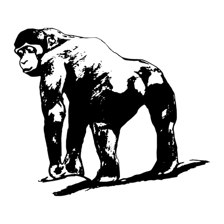 king s: The graphic image of the monkey, the gorilla. Standing back, pose, back view. On white background illustration. Drawing by hand Illustration