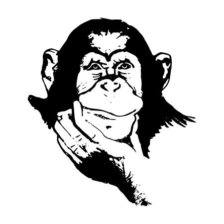 Das grafische Bild des Affen, Affenkopf, das Gesicht. Zeichnung von Hand auf einem weißen Hintergrund.