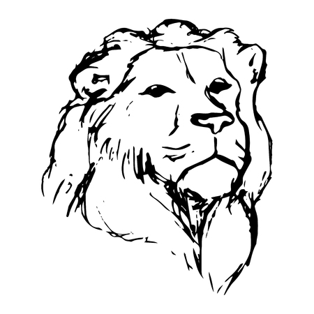 Graphic image of a lion. Lion head on white background, abstract drawing. Lion with mane vector