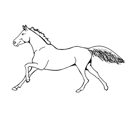 Graphic image of a galloping horse. The outline of a horse on a white background. Vector illustration