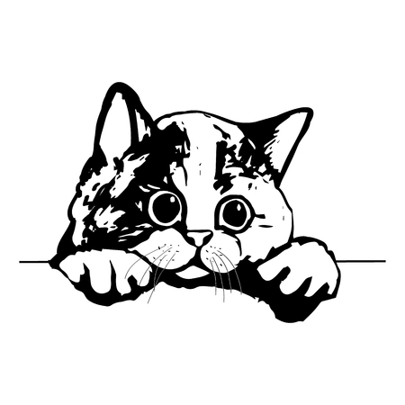 Graphic picture of a cute kitty. The head of a cat on white background, vector illustration Illustration