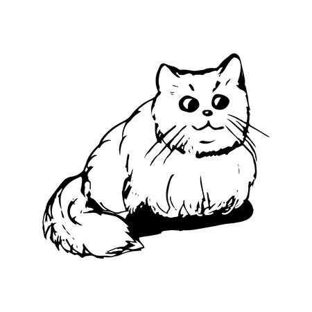 Cat with big eyes on white background