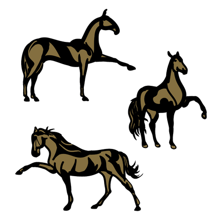 The graphic image of a dressage horse. Horse steps - the pattern of black lines on a white background. Vector illustration of (a set of contours) Illustration
