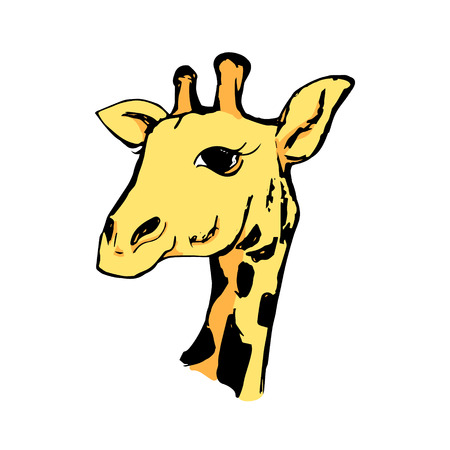 Graphic image of a head of a giraffe on a white background. Drawing a giraffe, vector illustration