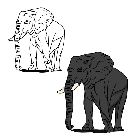 Graphic image of a large elephant. The picture of a gray elephant on a white background. The contour of the animal. Vector illustration of (set of two drawings). Illustration
