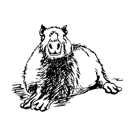 biggest animal: Graphic image large water rodent. The pattern of black lines in the form of capybaras on a white background. Vector illustration