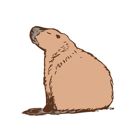 biggest animal: Graphic image large water rodent. Colored drawing - capybara brown. Vector illustration
